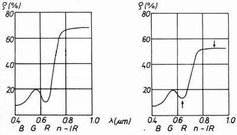 Abb.6-11: Veränderung der spektralen Signatur von Laubbaumblättern infolge Schädigung (aus Kraus, 1988)