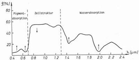 Abb. 6-13: spektraler Reflexionsgrad eines Blattes (aus Kraus, 1988)