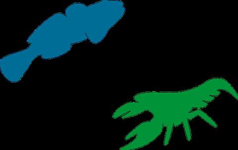 Projektlogo MoBI-aqua mit dem Umriss einer Grundel und eines Flusskrebses