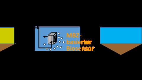 Biosensors Project