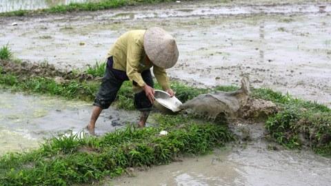 Irrigation of rice fields in Vietnam