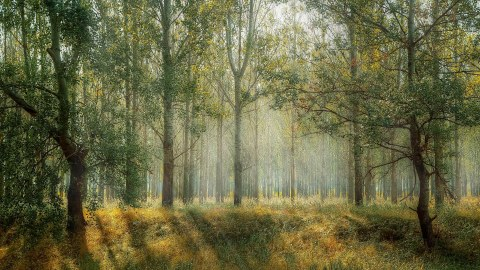 ONEforest: Wald