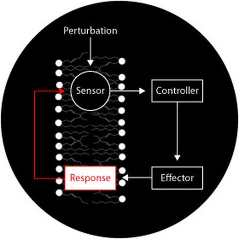 membrane response system