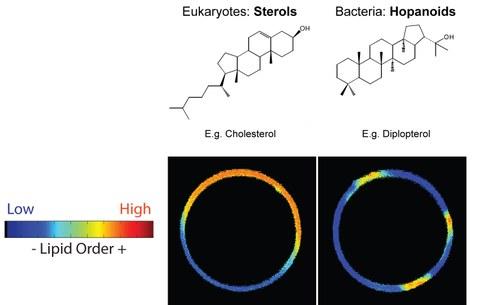 Phase Separation: Eukaryotes vs. Bacteria