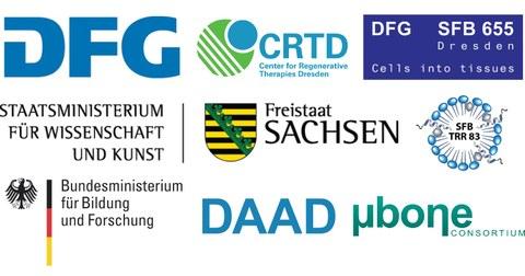 Logos: DFG, CRTD, DFG SFB 655 Dresden: Cells into tissues, SMWK - Freistaat Sachsen, SFB TRR 83, BBF, DAAD, ubone