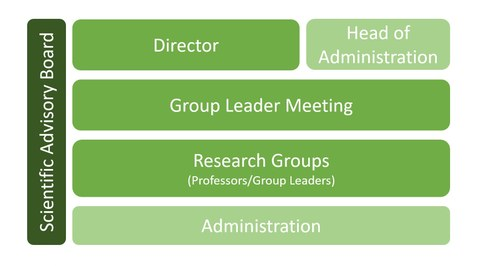 1st level: administation and director. 2nd level: research group leader meeting. 3rd level: Research Groups (Professors/Group Leaders). 4th level: members meeting. On the left: Scientific Advisory Board