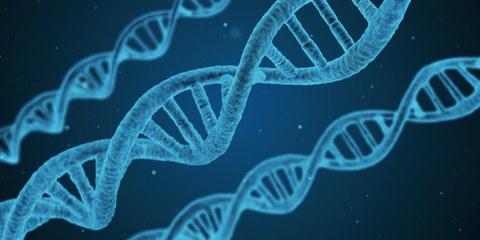 blaue DNA-Helixe auf dunkelblauem Hintergrund