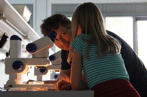 Examining the samples under a microscope for children