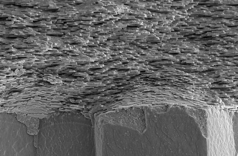 Black and white tomography image of the mother-of-pearl structure. The structure looks a little bit like uneven wall of bricks