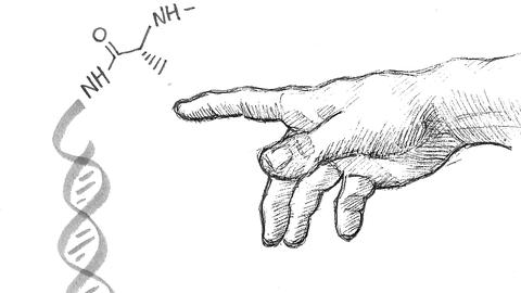 Zeichnung Biomimetik