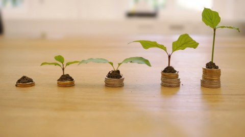 Plants growing out of small coin towers