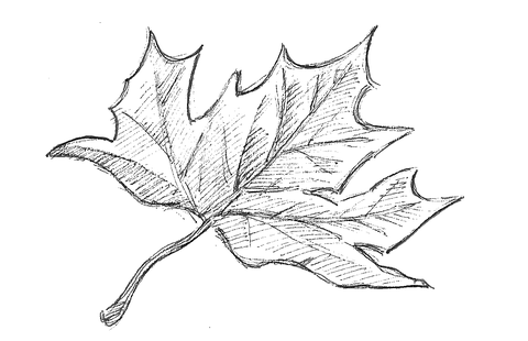 Structure/Surface of a green leaf