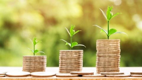 Pflanzen wachsen aus kleinen Türmen aus Geldstücken