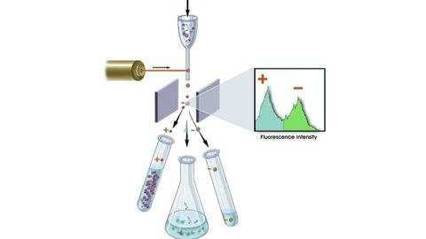 Fluorescence Activated Cell Sorting