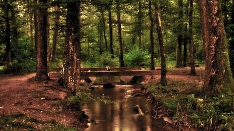 Ein Wald mit einem Fluss
