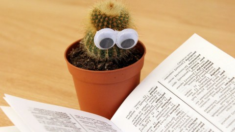 Kaktus mt Brille beim Lesen