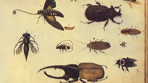 Bild aus Wagners Thier Buch