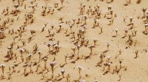 Jordanien Pflanzenwelt