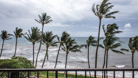Palmen Meer Sturm
