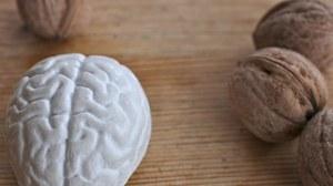 Walnüsse und ein kleines Gehirn