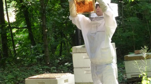 On Bees and Humans - A Love Affair between Nature and Culture