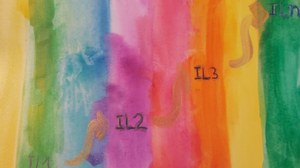 Its a watercolor picture. Bright colors form a color spectrum. The colors blend seamlessly into the next one. In the picture there are the labels IL1, IL2 and IL3 and ILn arranged in ascending order. The labels are connected with golden arrows.