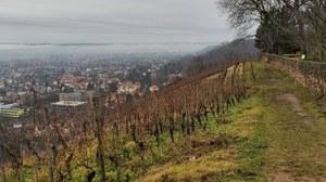 A vineyard in Dresden. It is autumn. Light fog is on the horizon.