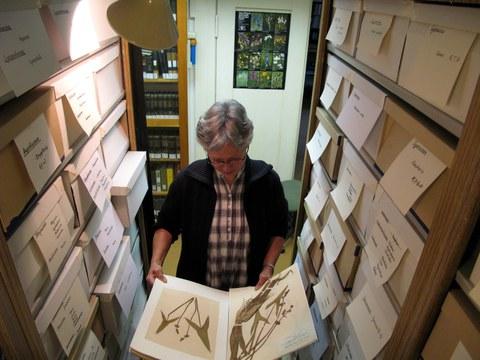 Im Herbarium