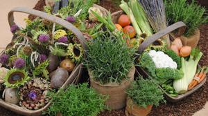 Foto mit zwei Körben und drei Töpfen. Die Töpfe sind mit Kräutern bepflanzt. In den Körben liegen Gemüse und Blütenköpfe.