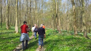 Picture in back view of several people, walking through a sparse forest. The trees are not foliated yet and the ground is covered with early blooming plants.