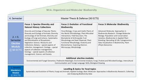 graphische Darstellung des Ablauf des Masterstudiengangs Organismic and Molecular Biodiversity