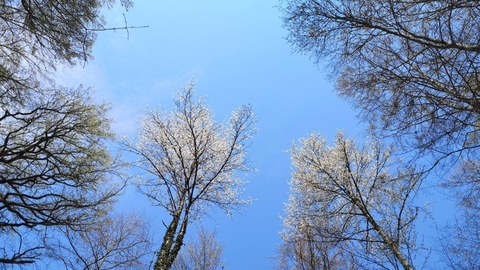 Several trees with blue sky