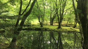 A pond surrounding by green trees