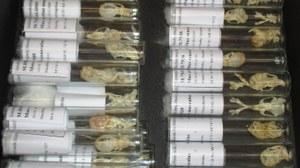 Sammlungsobjekte