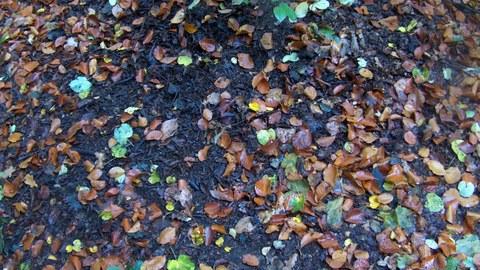Blätter auf der Erde