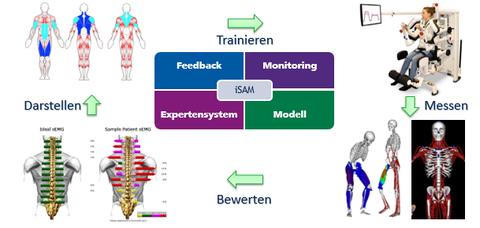 iSAM - Intelligente Sensoren für ausbalancierte Muskeln