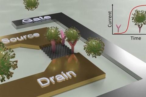 Schematische Darstellung des Konstruktionsprinzips eines Sensors zum Direktnachweis von SARS-CoV-2-Viren