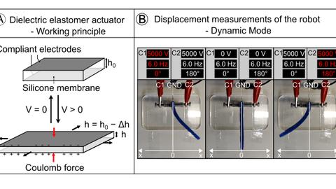 Dielectric elastomer actuators (DEAs)