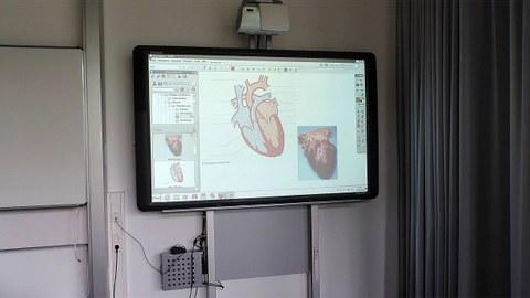 """Studentische Arbeit zum Thema """"Herz"""" mittels Interaktion"""