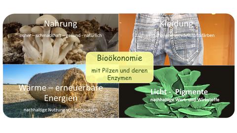 Bioökonomie mit Pilzen: Nahrung, Wärme, Kleidung, Licht