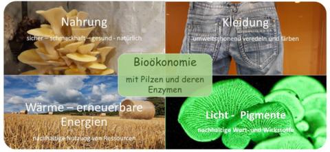 Einsatz von Pilzen und ihrer Inhaltsstoffe für eine nachhaltige, biobasierte Wirtschaft im Sinne der Bioökonomie
