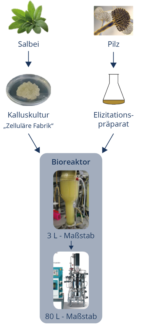 schubild Prozess SchuPlaHolz