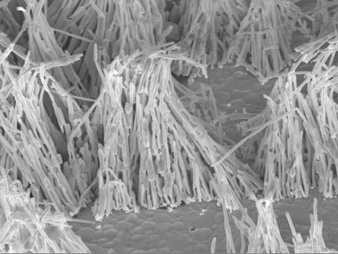galvanische Zinn-Nanodrähte