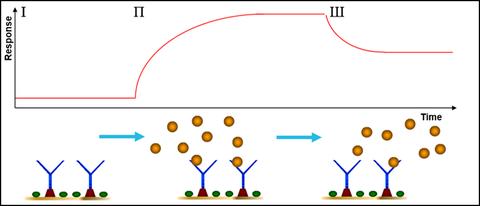 SPR Sensorgram