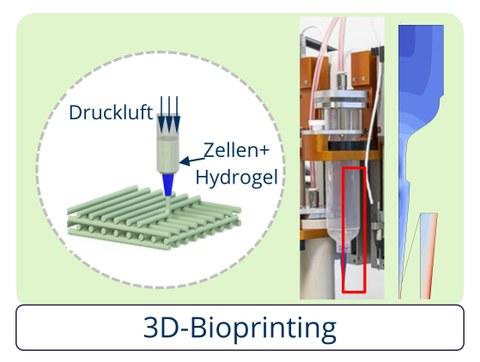 Green Bioprinting