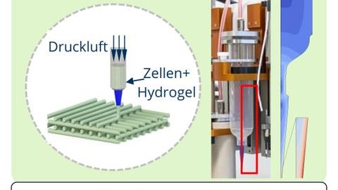 Schema Bioprinting