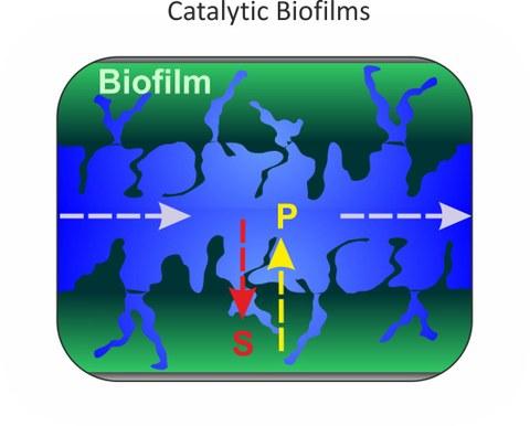 Scheme Biofilm