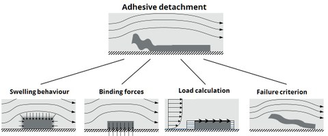 """grafic. cleaning sumaltion where """"adhesice detachement"""" is modeled through """"Swelling behavior"""", """"Binding forces"""", """"Load calculation"""" and """"Failure criterion"""""""