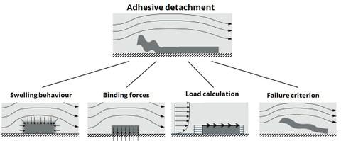 """Grafik. Modellierungsschritte zur Reinigungssimulation. """"Adhesive detachement"""" modelliert durch """"Swelling behavior"""", """"Binding forces"""", """"Load calculation"""" , """"Failure criterion"""""""