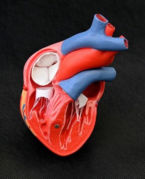 Gewebte integral gefertigte Implantate für das Herz-Kreislaufsystem